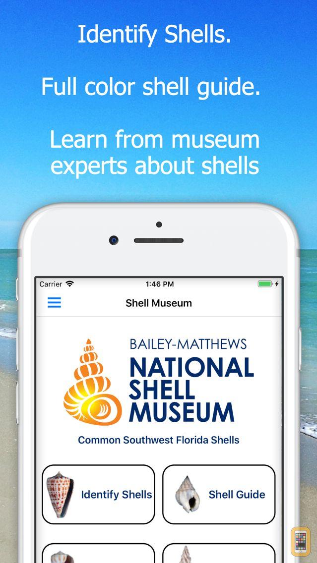Screenshot - Shell Museum: Identify Shells