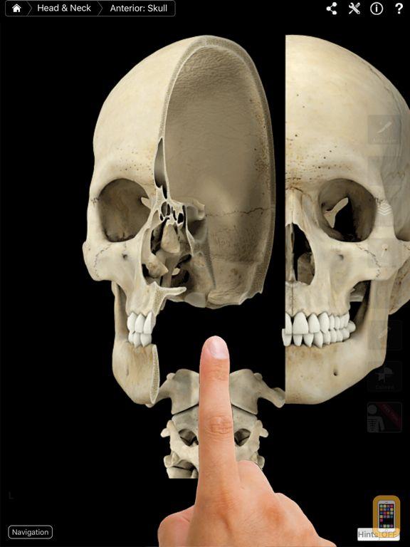 Screenshot - Skeleton System Pro III