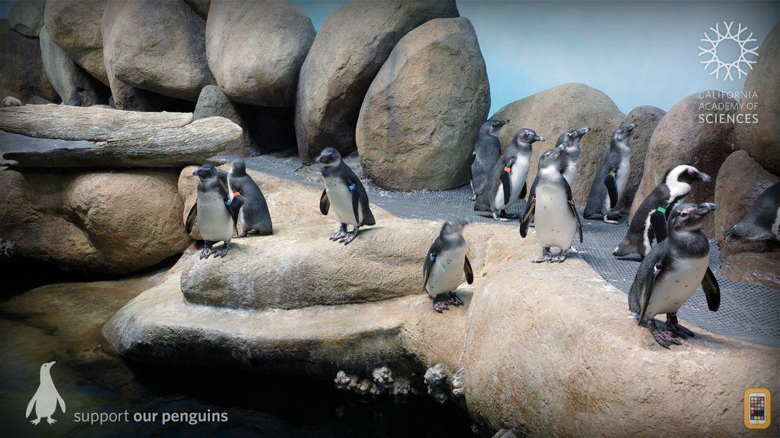Screenshot - Pocket Penguins