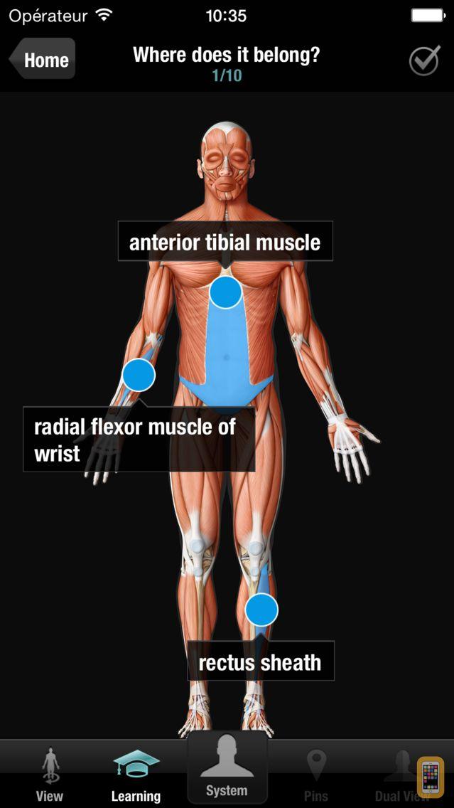 Screenshot - Virtual Human Body