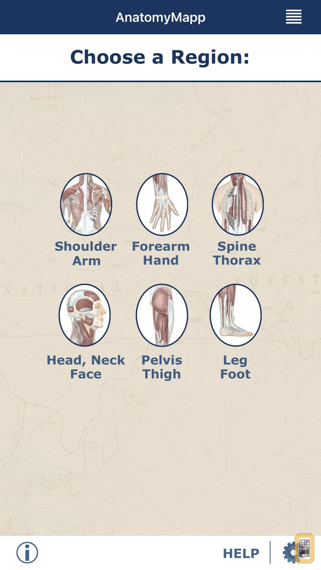 Screenshot - AnatomyMapp