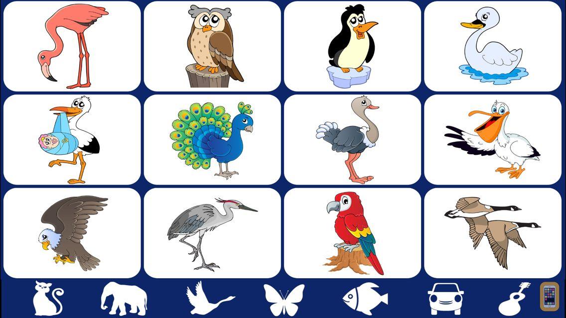 Screenshot - Video Touch - Wild Birds