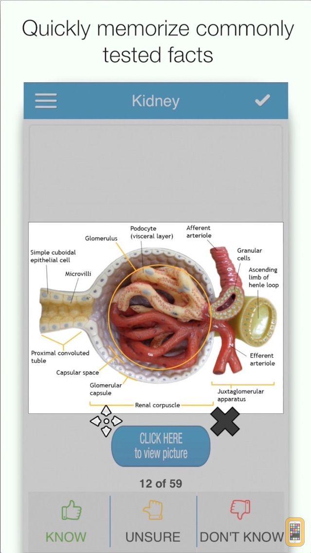 Screenshot - NBDE Biochem/Physio Cram Cards