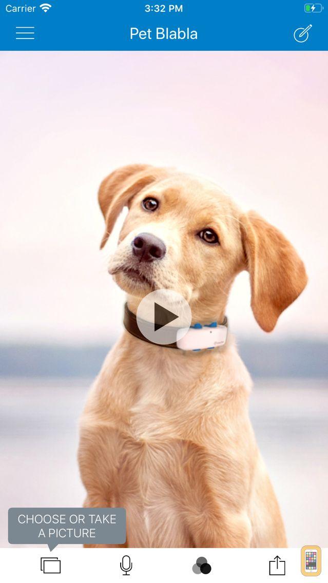Screenshot - Pet BlaBla - Make Your Cat, Dog or Pet Talk